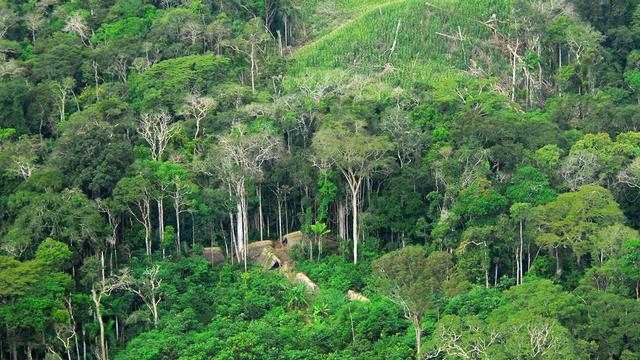6 Fakta Kebakaran Hutan Amazon yang Mengerikan, Terparah dalam Sejarah