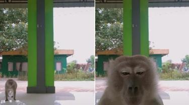 Kocak, Viral Monyet Curi Ponsel Remaja yang Sedang TikTokan