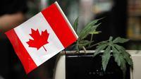 Kanada melegalkan ganja sejak 17 Oktober 2018 (AP/Jae C Hong)
