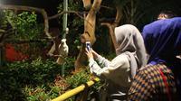 Sensasi melihat taman satwa atau kebun binatang malam hari di Purbasari nuansa malam, Purbalingga. (Liputan6.com/Dinkominfo PBG/Muhamad Ridlo)