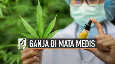 Ganja atau mariyuana, ternyata memiliki 100 bahan kimia berbeda yang disebut dengan cannabinoid.