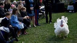 Ivanka Trump dan anak-anaknya menghadiri upacara pengampunan kalkun oleh Presiden AS Donald Trump dalam tradisi tahunan perayaan Thanksgiving di Gedung Putih, Washington, Selasa (20/11). Kalkun tersebut diberi nama Peas. (Brendan Smialowski/AFP)