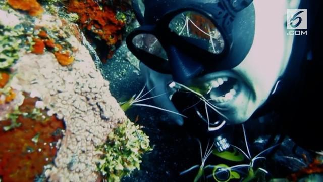 Sekelompok penyelam membiarkan udang membersihkan gigi mereka. Momen ini terjadi saat mereka menyelam di perairan Bali.