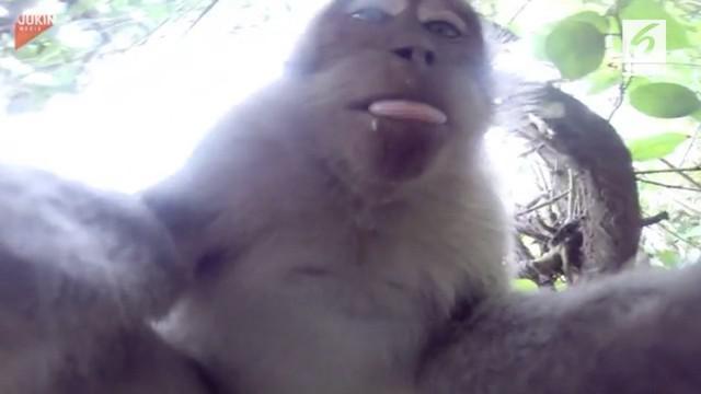 Ketika mengunjungi Pura Uluwatu, Bali, seorang turis dikejutkan dengan aksi seekor monyet yang selfie dengan kamera GoPro miliknya.