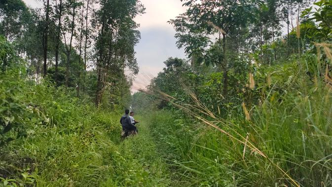 Areal konservasi PT MHP yang dulunya menjadi tempat permukiman warga Dusun Cawang Gumilir Musi Rawas Sumsel, kini dipenuhi tanaman-tanaman seperti ekaliptus dan semak belukar (Liputan6.com / Nefri Inge)