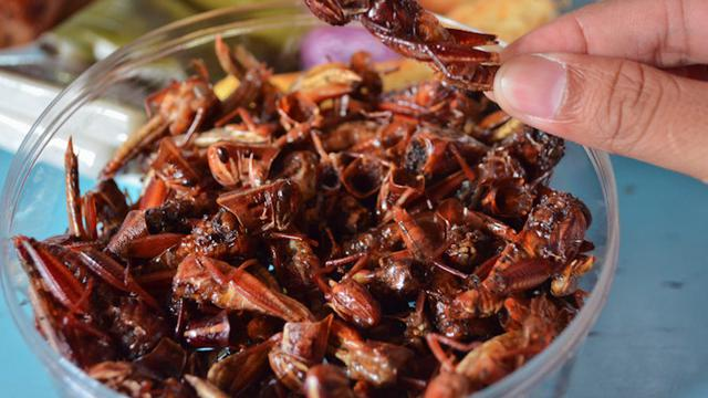 7 Kuliner Ekstrem Jogja Ada Tongseng Kelelawar Hot