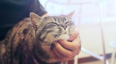 Ini Alasan Kucing Suka Dibelai di Bagian Dagunya, Bikin Auto-Gemas