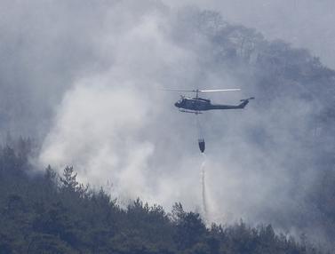 Kebakaran Hutan Dahsyat Landa Lebanon