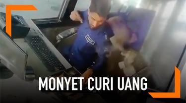 Seekor monyet terekam kamera mencuri uang dari petugas pintu tol di India. Monyet mengambil uang sebanyak Rs. 5000 atau sekitar Rp 1 juta.