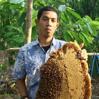 Mengikuti porses panen madu hutan Flores menjadi atralsi wisata yang unik. (Edy Suherli/Fimela.com)