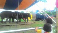 Yogyakarta akan suguhkan atraksi sirkus di liburan akhir tahun. (Liputan6.com/Fathi Mahmud)