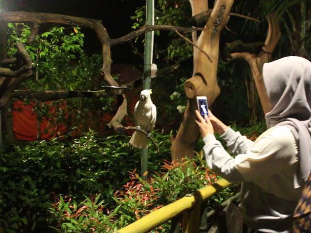 880+ Gambar Kebun Binatang Tanpa Warna HD Terbaik