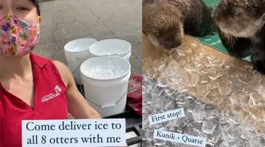 Nadine Trottier mengantarkan es untuk berang-berang