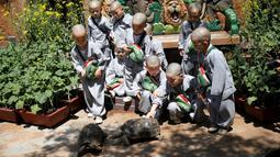 Para biksu cilik bermain dengan kura-kura saat mengunjungi taman hiburan Everland di Yongin, Korea Selatan, Kamis (2/5). Para biksu cilik ini menjalani pendidikan dengan rambut gundul dan jubah biarawan. (REUTERS/Kim Hong-Ji)