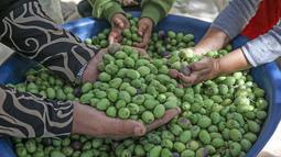 Sebuah keluarga Palestina memilah zaitun memilah buah zaitun selama musim panen di sebuah kebun zaitun di Khan Younis, Jalur Gaza Selatan pada 6 Oktober 2019. Musim panen buah zaitun adalah kesempatan untuk memperoleh uang di tengah kondisi hidup dan ekonomi menyedihkan. (SAID KHATIB/AFP)