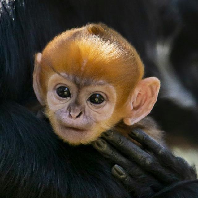 8700 Koleksi Gambar Hewan Monyet Cantik Gratis Terbaik