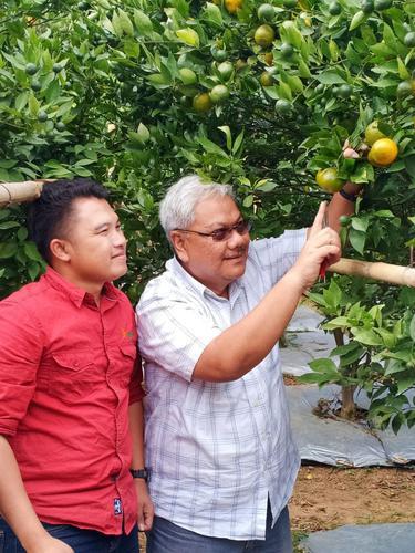 Rizal Pahlevi tengah mengamati satu buah jeruk Garut yang matang di pohonnya di are Agrowisata Eptilu, Cikajang, Garut, Jawa Barat.