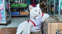 Doc: Twitter.com/Bodegacats_