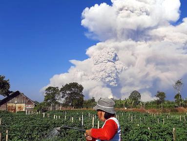 Seorang petani menyemprotkan cairan pestisida pada tanaman saat unung Sinabung memuntahkan abu ke langit, seperti terlihat dari Karo, Sumatera Utara, Selasa (2/3/2021).  Gunung Sinabung, Sumatera Utara, memuntahkan awan panas pada pukul 07.11 WIB, Selasa (2/1/2021). (AFP/Bahari Tarigan)
