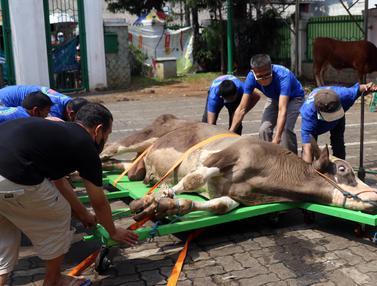 FOTO: Pemotongan Hewan Kurban di Hari Raya Idul Adha