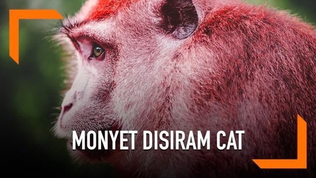 Seekor monyet di Taiwan terlihat berbeda dari monyet kebanyakan, ia memiliki tubuh berwarna merah. Tapi perbedaan warna pada si monyet ini bukan lantaran perbedaan jenis atau gen yang dimiliki si monyet. Hal itu disebabkan karena disiram cat berwarna...