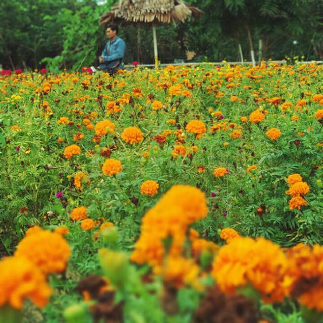 Pagi Warna Warni Bak Negeri Impian Di Taman Bunga Okura Pekanbaru