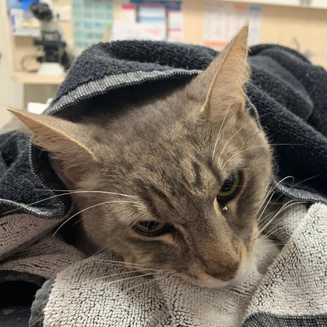 Seekor Kucing Selamatkan Majikan dari Serangan Ular Berbisa Ini Kisahnya Haru