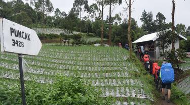 Pendaki Asing Ikut Bersih-Bersih Sampah Gunung Slamet