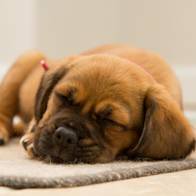 Jangan Berikan 12 Makanan Ini Pada Anjing Anda Atau Global Liputan6 Com
