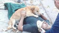 Anjing itu tidak beranjak hingga ambulans tiba membawa tuannya yang terluka.
