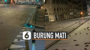Burung-burung mati berserakan di jalanan kota dan belum diketahui pasti penyebabnya.