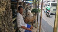 Dai, seorang pedagang kambing di Jl. Tentara Pelajar atau kawasan Pasar Kambing Semarang, menanti pembeli di kiosnya, Selasa (14/8 - 2018). (foto : Liputan6.com/Solopos.com/Imam Yuda S.)