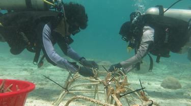 PLN Peduli lakukan transplantasi terumbu karang di Kawasan Konservasi Perairan Daerah (KKPD) Kabupaten Konawe Selatan, Sulawesi Tenggara (Sultra).