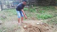 Jenazah bayi di Aceh hilang misterius. (Liputan6.com/Rino Abonita)