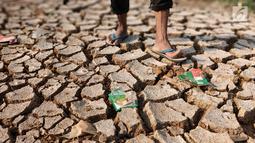 Kondisi tanah di sekitar Kanal Banjir Barat (KBB) yang mengalami kekeringan di kawasan Tanah Abang, Jakarta, Jumat (12//2019). Musim kemarau yang terjadi di Ibu Kota menyebabkan debit air di KBB berkurang sehingga menimbulkan keretakan tanah di sekitarnya. (Liputan6.com/Immanuel Antonius)