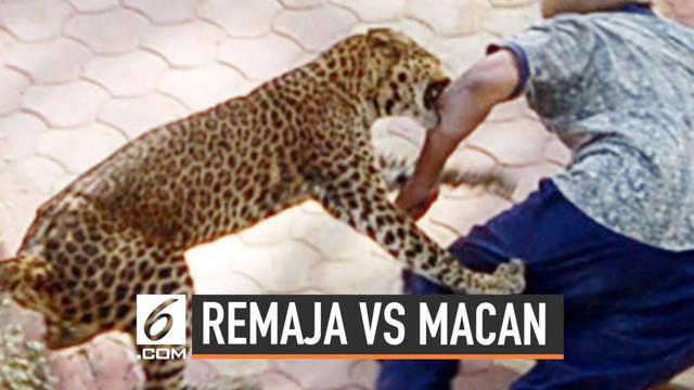 Remaja berusia 14 tahun dengan sigapnya melawan seekor macan tutul yang menyerang adiknya. Bermodalkan batu dan batang kayu, remaja tersebut memukul macan agar melepaskan cengkramannya dari tubuh sang adik.