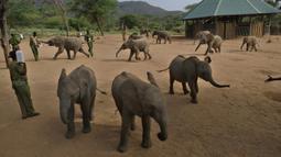 Anak-anak gajah menghampiri para penjaga yang memanggilnya di Reteti Elephant Sanctuary, Namunyak Wildlife Conservancy, Kenya, Rabu (26/2/2020). Masyarakat di sini merawat anak-anak gajah yang ditinggalkan atau yatim piatu. (TONY KARUMBA/AFP)