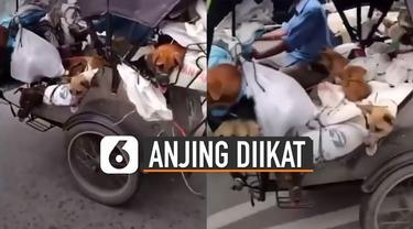 Video anjing-anjing terikat di atas becak motor viral di media sosial.