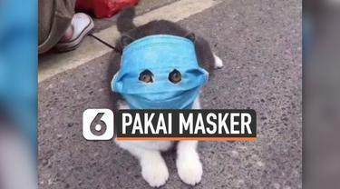 Agar tak terinfeksi virus corona, hewan peliharaan ini dipakaikan masker oleh pemiliknya. Potret menggemaskan para hewan viral di media sosial.