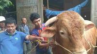 Presiden Jokowi menyumbangkan sapi kurban di Sumatera Barat. (Liputan6.com/ Novia Harlina)