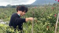 Anne Avantie saat memetik cabai di kebunnya di Semarang. (dok. Instagram @anneavantieheart/https://www.instagram.com/p/CDxR6OYDu4C/?hl=en)