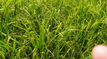 Sejumalh lahan pertanian produktif di Garut, Jawa Barat mulai beralih fungsi akibat semakin gencarnya pembangunan infrastruktur.