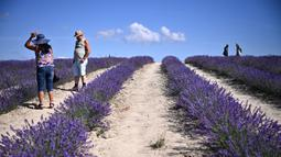 Orang-orang berjalan di ladang lavender di Sale San Giovanni, Cuneo, Italia, 29 Juni 2021. Bunga lavender bermekaran menyajikan pemandangan yang indah. (MARCO BERTORELLO/AFP)