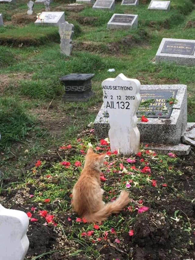 Haru, Kisah Kucing yang Bersedih Usai Pemiliknya Wafat