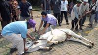 Sumbangan hewan kurban dari presiden kali ini bukan hanya untuk Aceh saja. Sumbangan serupa juga akan ditebar ke 33 provinsi yang ada di nusantara dalam rangka Idul Adha atau Hari Raya Kurban. (Via Twitter/@Twuot)