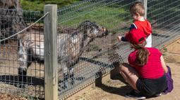 Anak-anak mengunjungi Taman Margasatwa Symbio di tengah pandemi COVID-19, Sydney, Australia, 5 September 2020. Beberapa kebun binatang dan taman margasatwa di Sydney sudah kembali dibuka untuk umum. (Xinhua/Zhu Hongye)