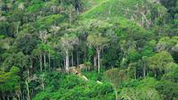 Suku pribumi yang mengisolasi diri di hutan hujan Amazon, Brasil (Wikimedia / Creative Commons)