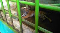 Ada aturan tegas yang diterapkan pihak pengelola saat Medan Zoo dibuka kembali