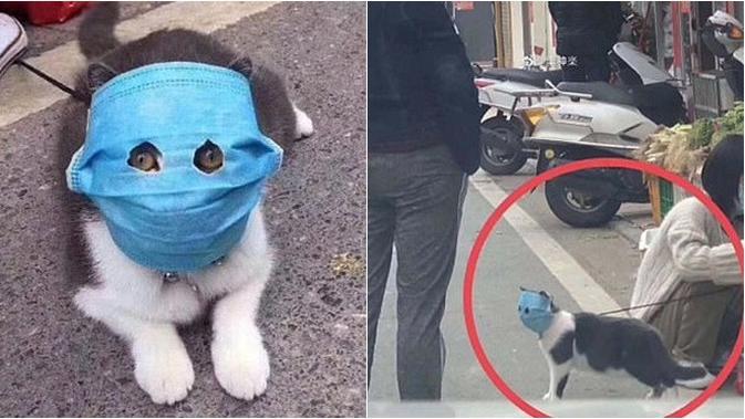 Pakaikan Masker pada Hewan Dianggap Bisa Cegah Penularan Virus Corona, Efektifkah?