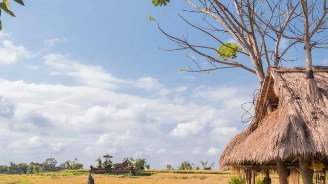 Kembali Ke Desa Kembali Ke Visesa Ubud Regional Liputan6com